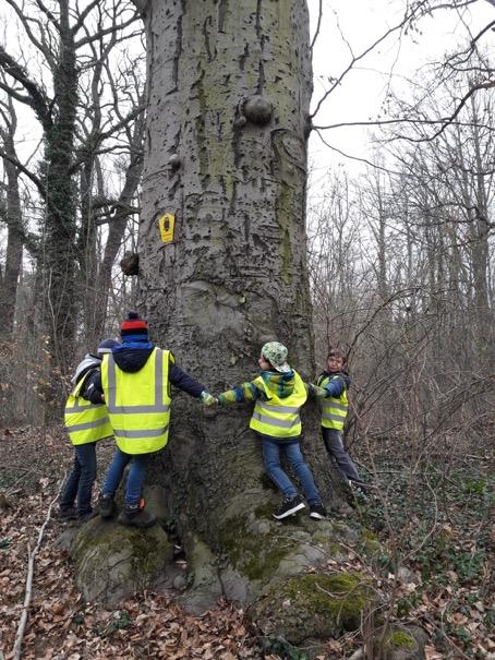 Internationaler Tag des Waldes - gefeiert mit einer Aufräumaktion