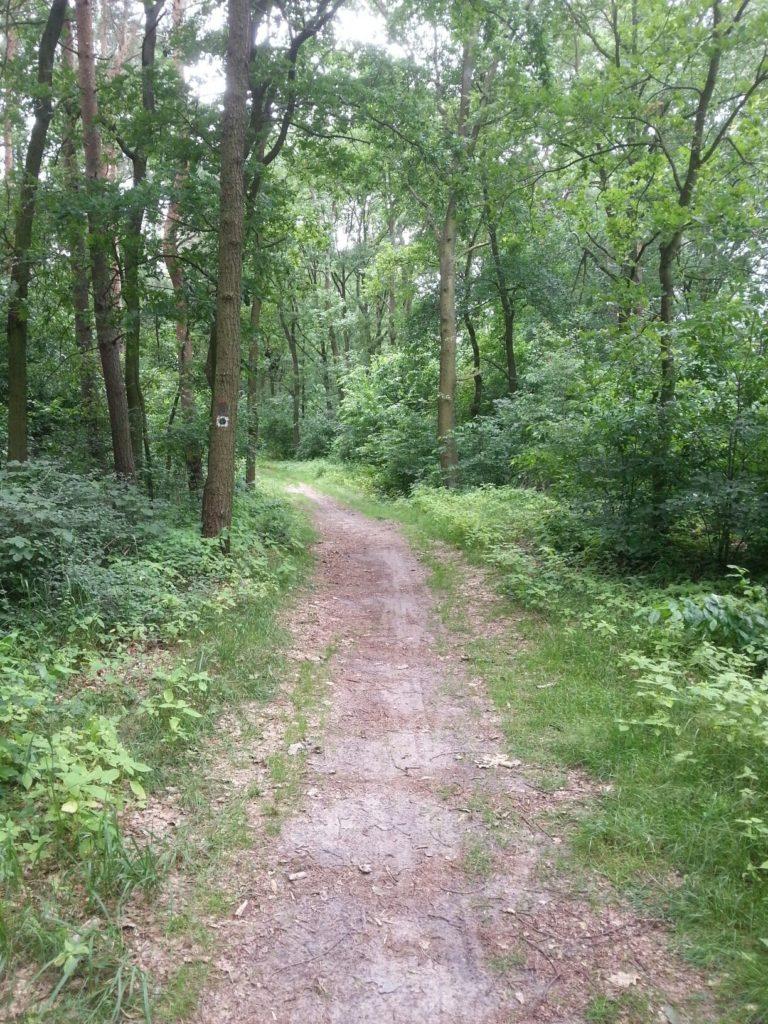 Ein schöner Tag im Wald